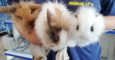 Nuovo Arrivo Coniglietti Ariete e Testa di Leone